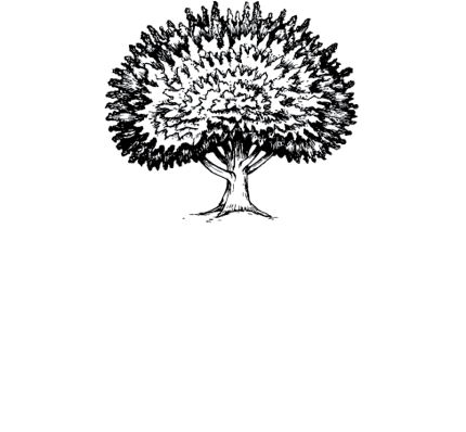 Mulberry Seed
